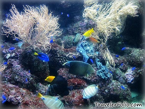 fish tank wallpaper. An albino lion fish, isn#39;t it?