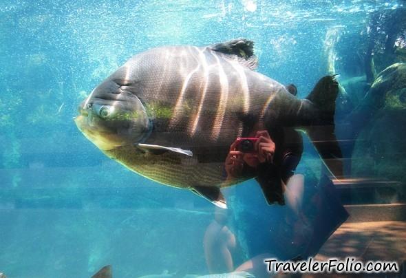 giant-fish