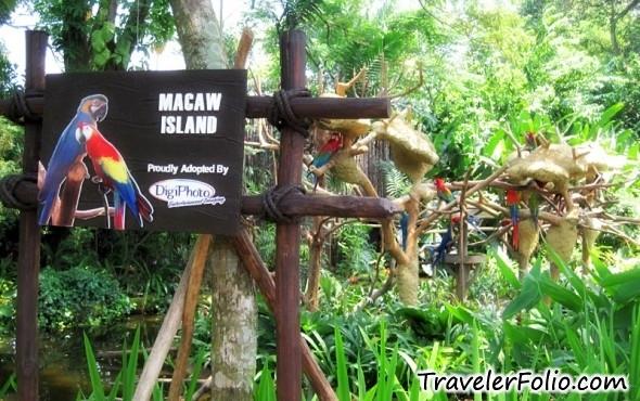 macaw-island