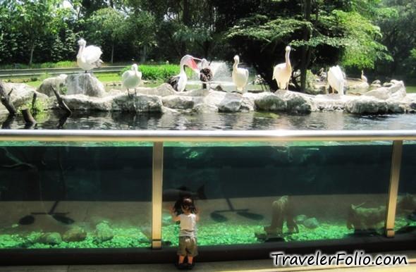 pelican-cove