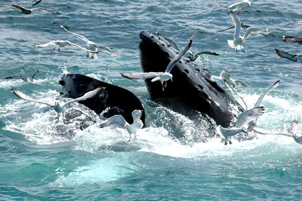 whale-sea-gull