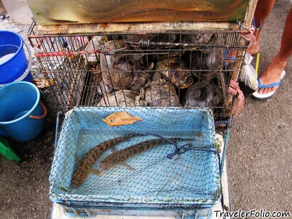 live-fish-market