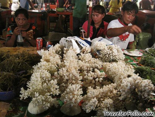 coral-seaweed-sale