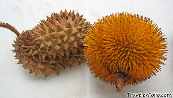 sabah-red-durian-wiki