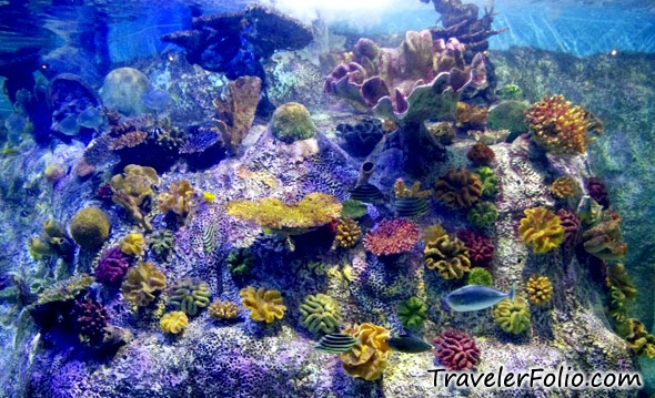 Melbourne Aquarium Melbourne Things To Do Reviews