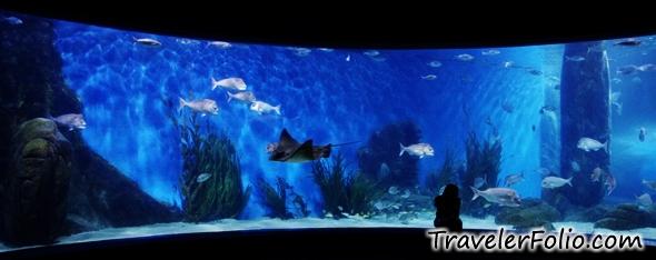 Melbourne aquarium melbourne things to do reviews for Stingray fish tank