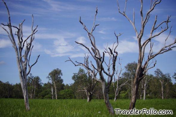 Dead Trees Water