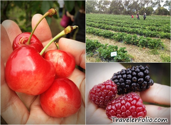 internship report on mitchell fruit farm Mitchell's fruit farms pvt ltd virtual university of pakistan internship report lindon farms freeze-dried fruit a p canada co - fruit vegetable inc chep canada inc chestnut hill farms chilean fresh fruit association chiovitti banana co ltd chiquita canada.