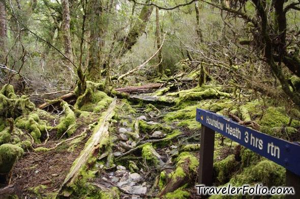 cradle mountain enchanted forest tasmanian wilderness. Black Bedroom Furniture Sets. Home Design Ideas