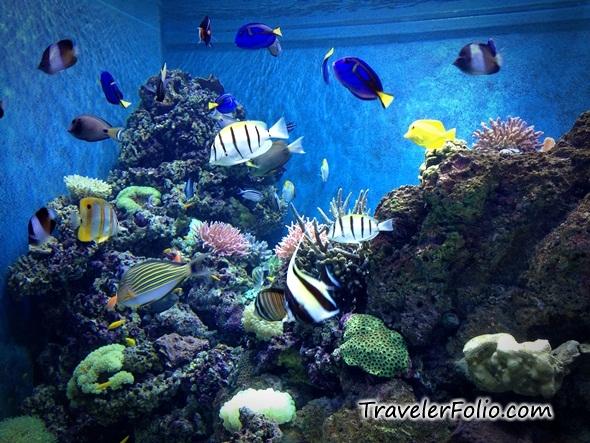 Marine Life Park - Worlds Largest Oceanarium @RWSentosa @ Singapore ...