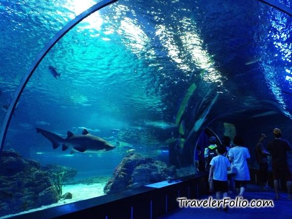 shark-busan-aquarium-tunnel