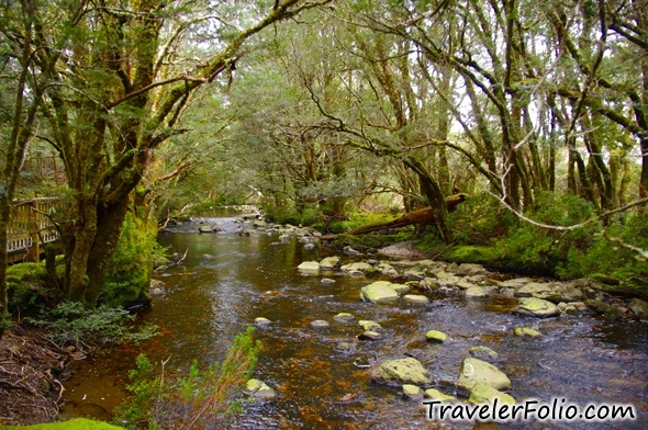 creek-enchanted-forest-cradle-mountain-tasmania