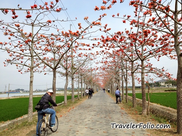 tainan-cotton-tree-taiwan