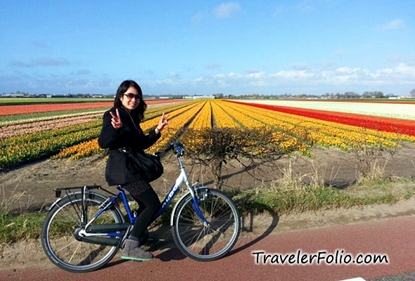 cycle-tulip-field-netherlands