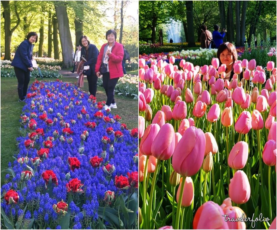 Tulip Amsterdam Keukenhof: Keukenhof Flower Power 2019