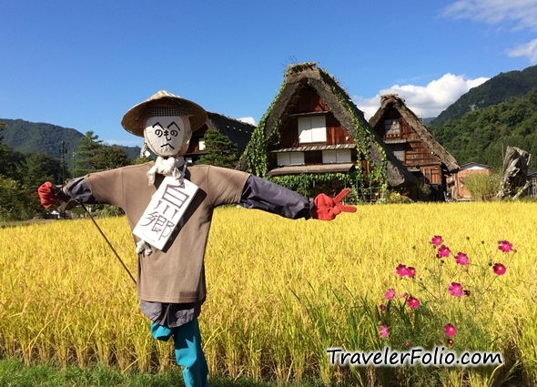 golden-paddy-field-shirakawa-go-japan