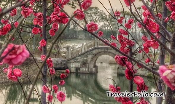 plum-blossom-liang-zhu-cultural-park-ningbo