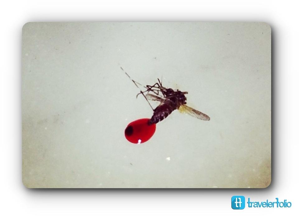 mosquito-dead