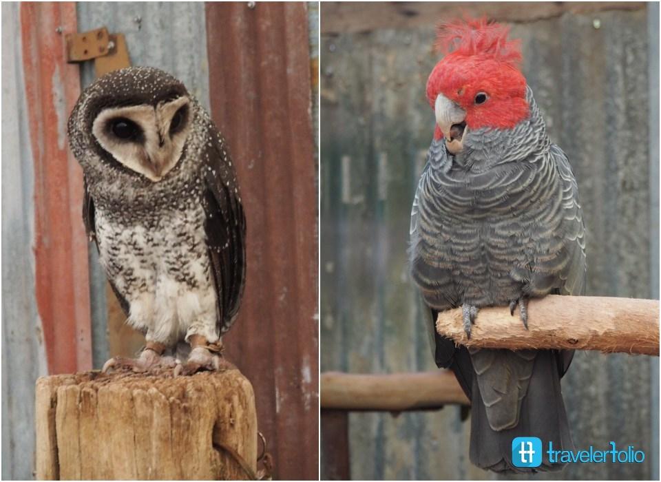 caversham-wildlife-park