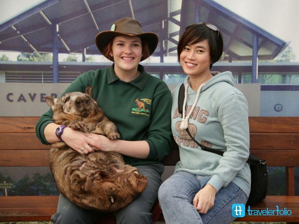 wombat-caversham-wildlife-park-australia