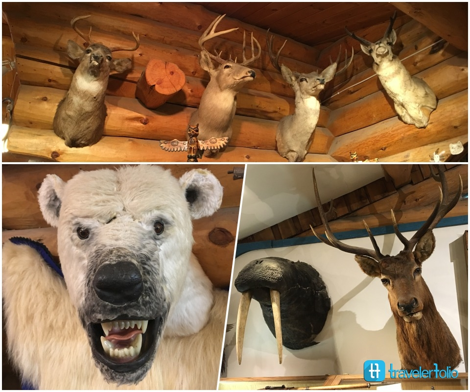 alaska-wildlife-wall-feature