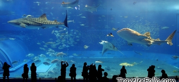 okinawa-churaumi-aquarium-whale-shark-sea-tank-japan