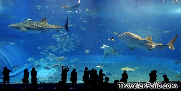 okinawa-churaumi-aquarium-whale-shark-sea-tank-japan