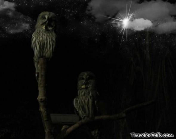 World Traveler Owl Carry Duffel Word  Html