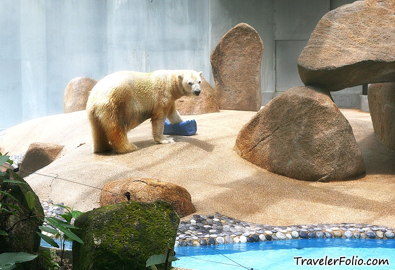 the two polar bears at the